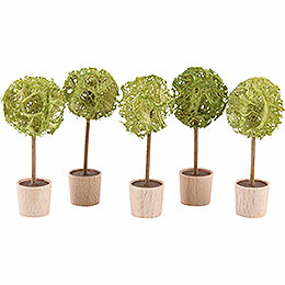 Almond tree, set of five  -  5cm / 2inch